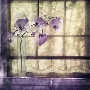 Window Orchids by Mindy Sommers