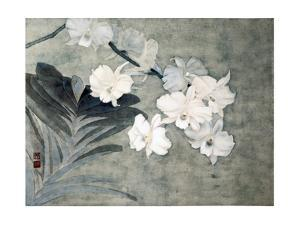 Attractive Orchids by Minrong Wu
