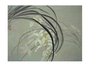 Cymbidium Orchids by Minrong Wu