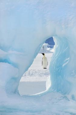 An Adult Emperor Penguin Standing on the Ice on Snow Hill Island. Seen through an Ice Arch. by Mint Images - David Schultz