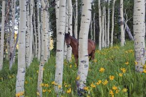 Horse in a Field of Wildflowers and Aspen Trees. Uinta Mountains, Utah. by Mint Images - David Schultz