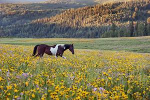 Horse in a Field of Wildflowers. Uinta Mountains, Utah. by Mint Images - David Schultz
