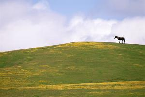 Lush Grazing for Horses in the Meadows of California. by Mint Images - David Schultz