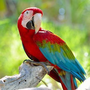 Macaw Sitting On Branch by mirceab