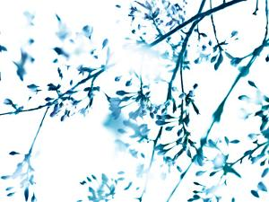 Cherry Blossom 8 by Mirja Paljakka