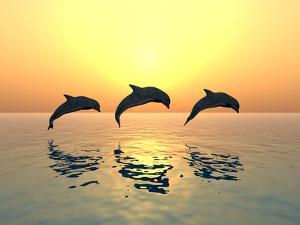Jumping Dolphins by MIRO3D