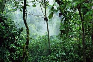 Mist Rising in Rainforest