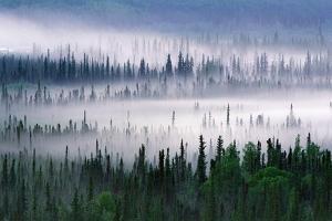 Misty Forest Near Mount Brooks