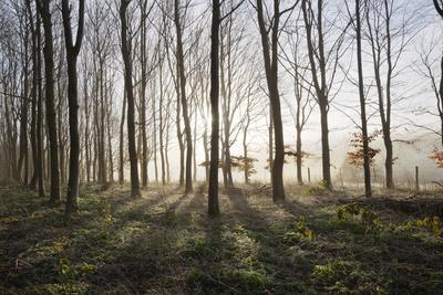 https://imgc.allpostersimages.com/img/posters/misty-wood-in-winter-stow-on-the-wold-gloucestershire-cotswolds-england-united-kingdom-europe_u-L-PWFGXR0.jpg?p=0