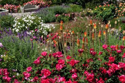 Beautiful Roses by Mitch Diamond