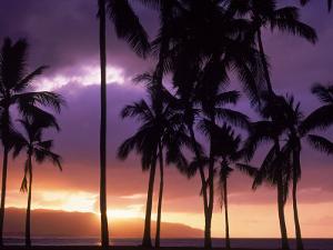 Silhouette of Palm Trees, Hawaii by Mitch Diamond