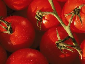 Tomatoes on Vine by Mitch Diamond
