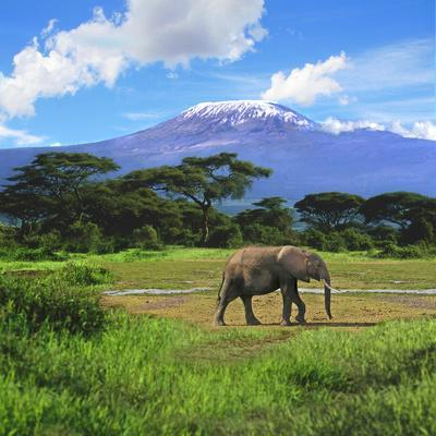 A Lone African Elephant (Loxodonta Africana) by Mt. Kilimanjaro, Amboseli Nat'l Park, Kenya