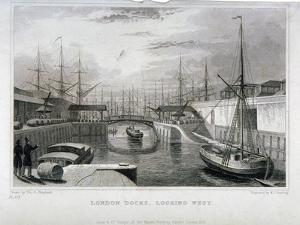 View of London Docks Looking West, Wapping, 1831 by MJ Starling