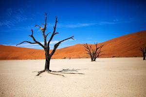 Bare Trees by MJO Photo