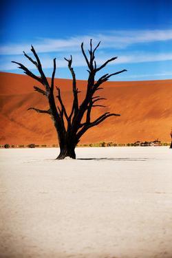Black Tree by MJO Photo