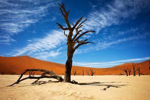 Dead Tree by MJO Photo