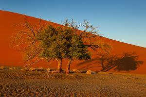 Desert Tree by MJO Photo