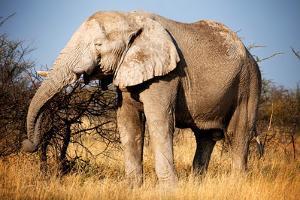 Elephant by MJO Photo