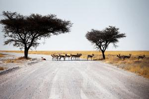 Impala Deer by MJO Photo
