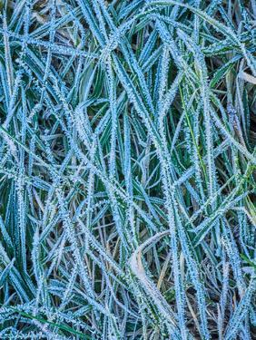 Grass Stems in a Winter Frost by MJT Photography