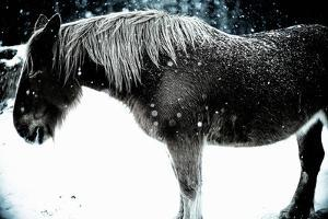 Snow Horse by moaan