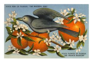 Mockingbird, Orange Blossoms, Florida