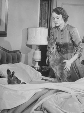 Model Loretta North with Small Kangaroos at the Australian Embassy Putting a Sick Kangaroo to Bed
