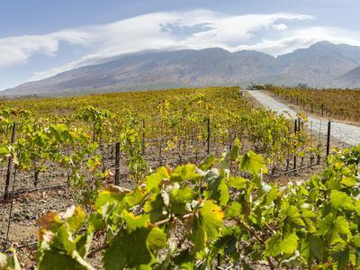 https://imgc.allpostersimages.com/img/posters/modern-viniculture-at-winery-fogo-island-part-of-cape-verde_u-L-Q1H20RK0.jpg?artPerspective=n