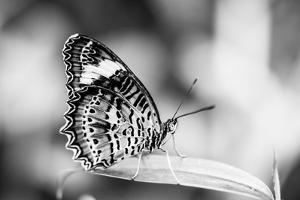 Beautiful Close Up of a Butterfly in the Garden by Mohana AntonMeryl