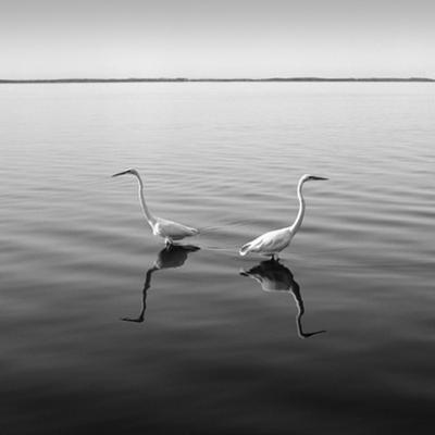 2 Herons by Moises Levy