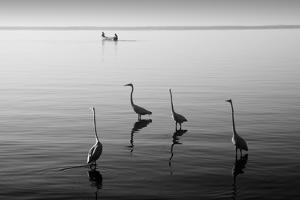 4 Heron and Boat by Moises Levy
