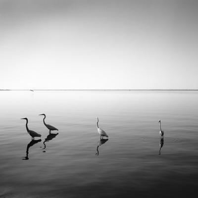 4 Herons by Moises Levy