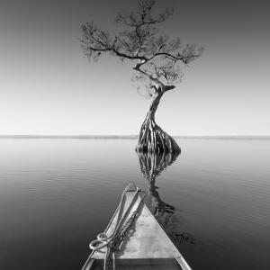 Alone with My Tree by Moises Levy