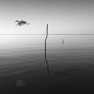 Fly by Moises Levy