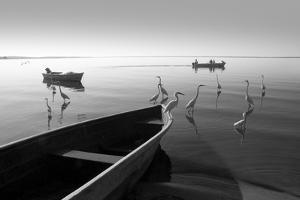 Herons and 3 Boats by Moises Levy