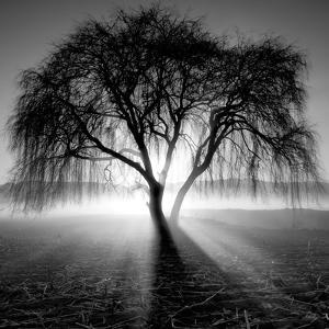 Lighting Tree by Moises Levy