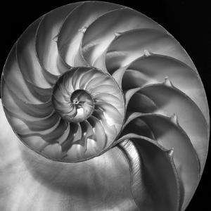 Nautilus 2 by Moises Levy
