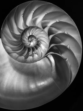 Nautilus 3-2 by Moises Levy
