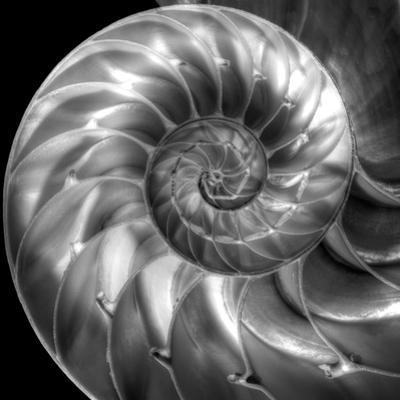 Nautilus 4 by Moises Levy