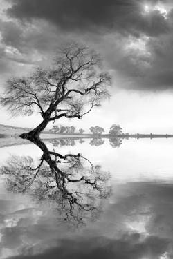 New Beginning Reflect by Moises Levy