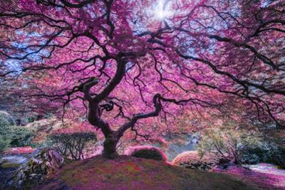 Pink Tree 2