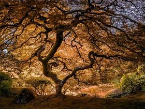 The tree 3 by Moises Levy