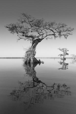 Trees at Lake 2 by Moises Levy