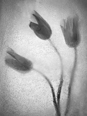 Tulipanes Amarillos by Moises Levy