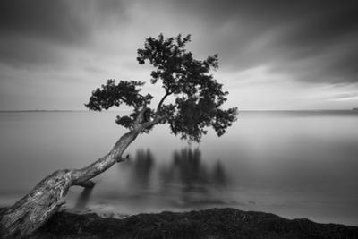 Water Tree 11 BW by Moises Levy