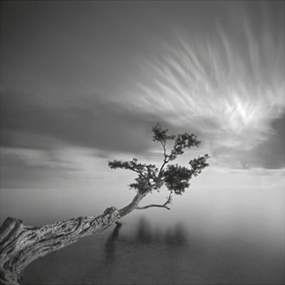 Water Tree 2006 by Moises Levy