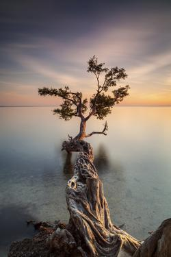 Water Tree III by Moises Levy