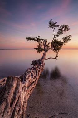 Water Tree IV by Moises Levy