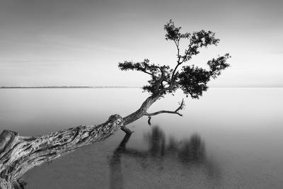 Water Tree IX